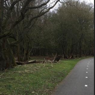 Hertjes in het bos tijdens het hardlopen